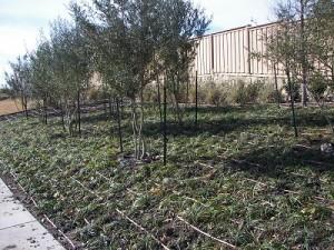 pearson_mar2014_drip-irrigation-300x225
