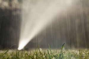 wet lawn with a sprayer in the background